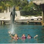 dolphin-leap.jpg