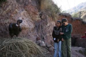 kids-meet-condor-2