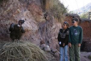 kids-meet-condor